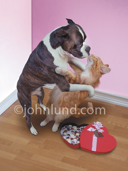 Dog And Cat Embracing Kissing