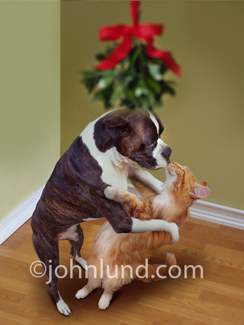 Funny Dog Kissing Cat Picture