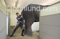 A businessman strains to push an elephant out of his office in a setting of cubicles. The man is leveraging himself against the elephants hindquarters.