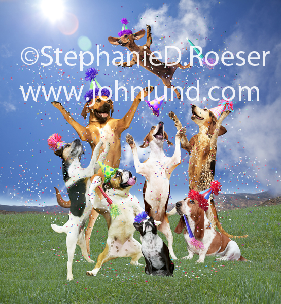 A group of dogs (Daschund, Ridgeback, Basset Hound, Beagle, Boston Terrier, Bulldog) celebrate with party hats, confetti, and by tossing each other into the air