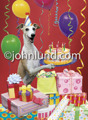 Funny lol picture of a Whippet Hound Dog surrounded by birthday gifts and holding a cake with candles in a birthday celebration.