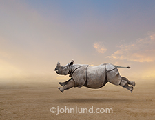 A charging rhinoceros gallops across the plain in a stock image about speed, power, momentum, ruggedness and durability.