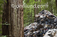 Picture of a huge pile of garbage surrouned by evergreen trees in a redwood forest illustratring environmental and pollution issues.