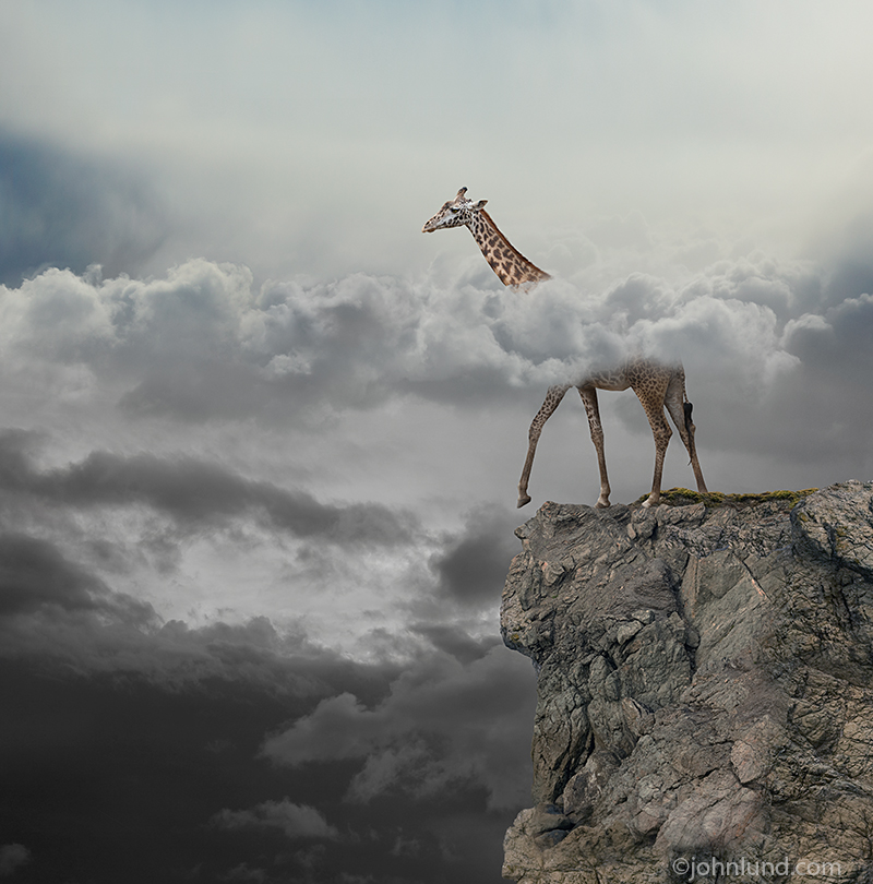 A giraffe stands on a cliff with his head above the clouds in an image about visibility, risk and awareness.