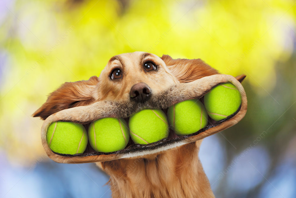 Video Of Dogs Playing Tennis