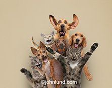 A group of animal friends in excitement in a fun and humorous stock photo that can't fail to bring a smile to your face!