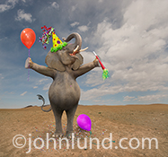 An elephant holds a balloon and noisemaker and wears a party hat in a funny birthday photo that might be captioned