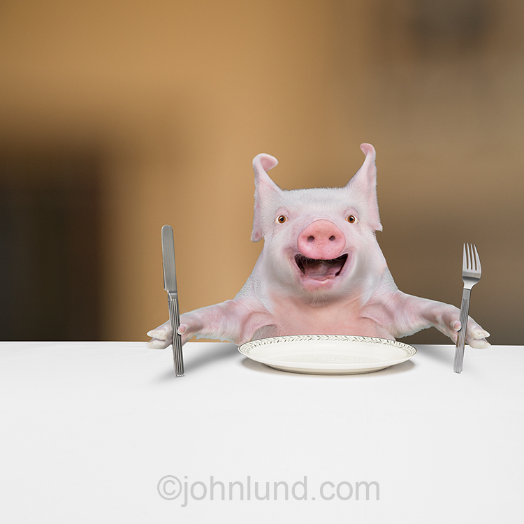 A funny pig sits at the table hold a knife and fork, and with an empty plate in front of him, ready for some food...and to pig out!