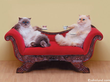 Two Cute Couch Cats