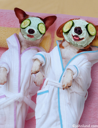 picture of funny dogs - spa dogs