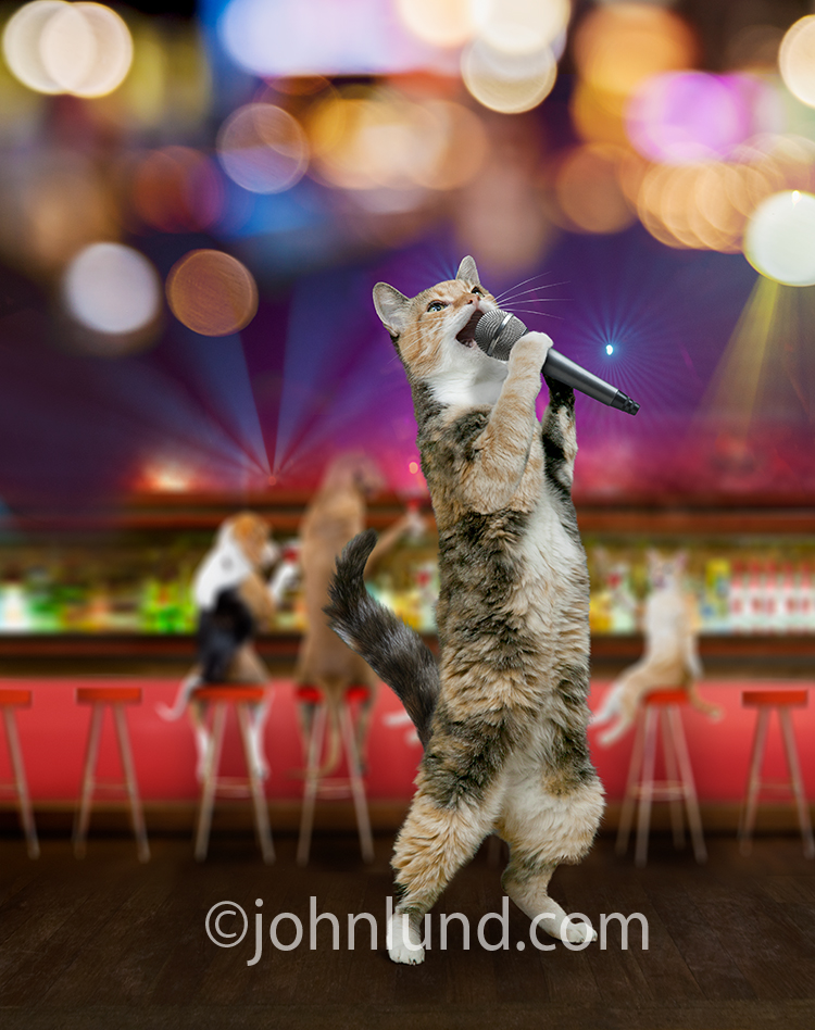 Not just a karaoke singing cat, a Calico karaoke singing cat belts out a tune in a nightclub in this funny stock photo and greeting card cat picture.