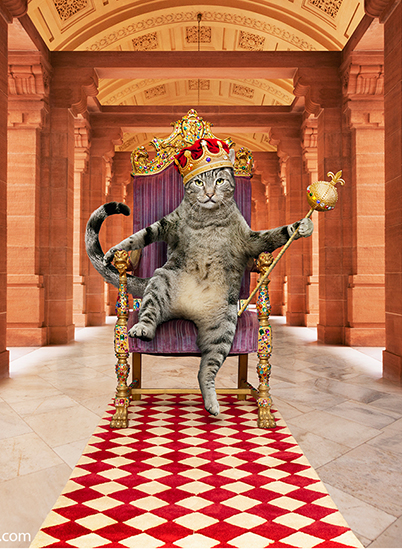 This funny cat thinks he is the King of Beasts as he sits on a throne, wearing a crown and holding a scepter in his paw.