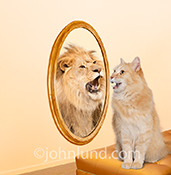A cat meows and sees a Lion roaring back in a mirror in a stock photo about self-esteem, self-confidence and the importance of how one sees oneself.