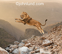 A lion leaps across a rugged landscape in this stock photo about danger, risk, and the exotic.