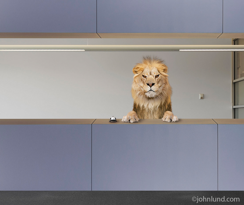 In this humorous look at customer service and complaints, a Lion wearing an angry, menacing expression stands behind the help counter.