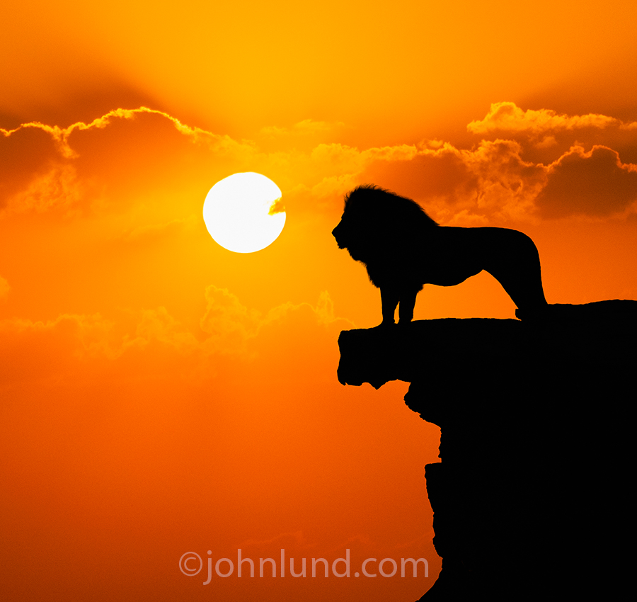 A lion stands on the edge of a cliff, silhouetted against a sunset, and surveying his domain below