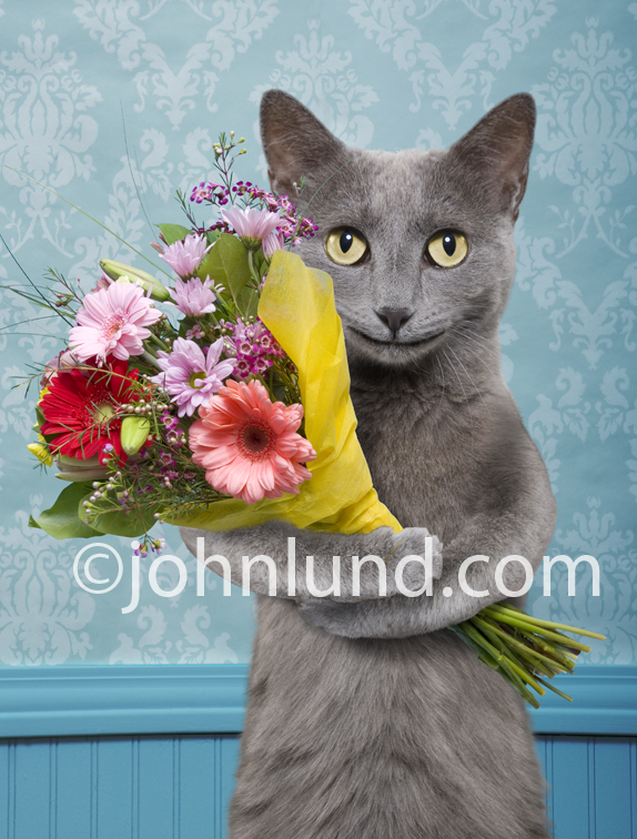 Funny Cat Greeting Card Image