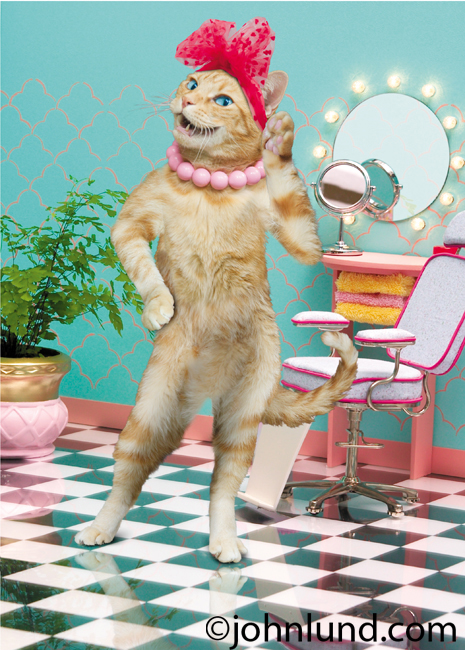 In a beauty salon, a cat strikes a pose in this funny cat picture created for a line of humorous greeting cards.