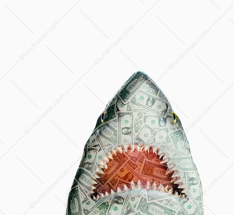 A shark made from money rises up with jaws wide open in a stock photo about the dangers and risks associated with money, lending and investments.