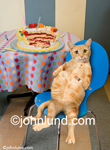 Funny pet picture of a fat cat obviously in discomfort from having eaten half of a birthday cake all by himself!