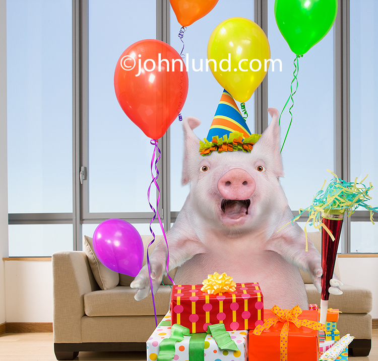 Funny pig at a birthday party bookmarktalkfo Image collections