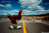 Stock photo and funny animal picture of a chicken crossing a road while wearing running shoes; an illustration of an old joke.