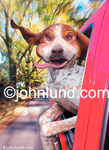 Funny animal picture and stock photo of a dog hanging his head out the car window.