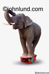 Stock photo of an elephant standing on an overstuffed suitcase trying to get it closed in a humorous picture.