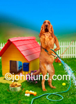 Stock photo and funny animal picture of a Bloodhound in Front of his dog house watering his lawn.
