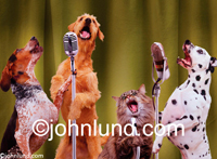 Three dogs and a cat sing together in front of microphones in a pet serenade and funny animal picture.