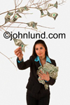 Picture of a woman plucking dollars off of a money tree, the mythical and ubiquitous symbol of easy money. She has a bundle of money clutched against her chest with her left hand.