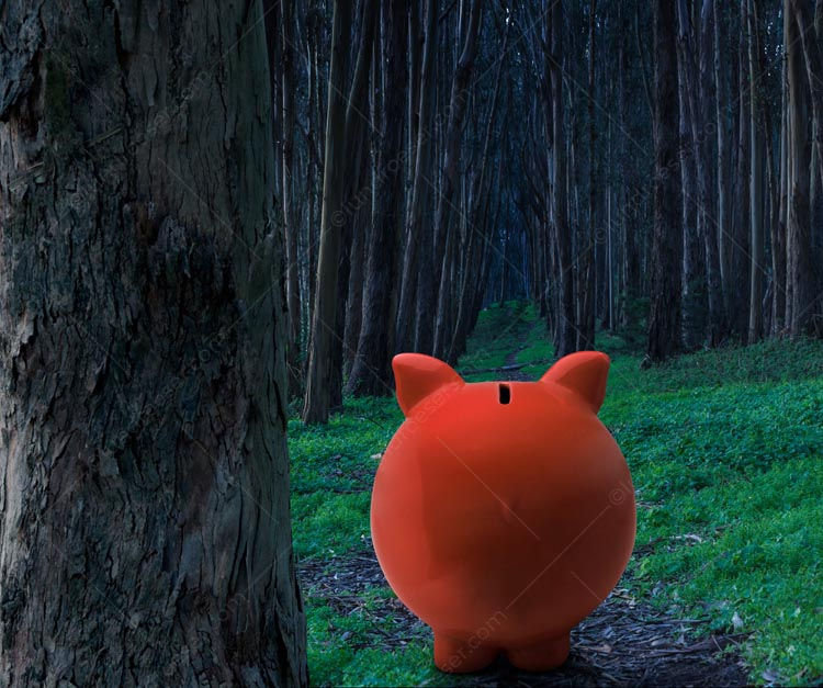 A piggy bank looks deep into a dark forest in a humorous stock photo about the risks and perils of savings, investment, and financial journeys.
