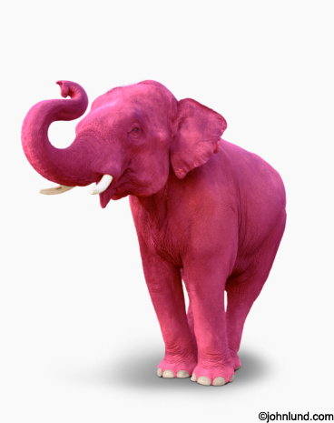 A pink elephant, trunk upraised and feet together, stands on a white background in this funny concept stock photo.