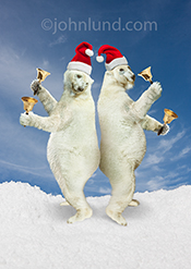 Two polar bears dance to the tune of Jingle Bells as they wear Santa Hats and ring bells in a funny anthropomorphic Polar Bear Picture.