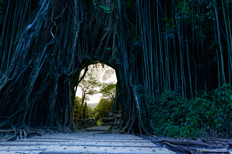 A dark and mysterious gate composed of twisted branches and roots form a gate or portal through which a lost world can be glimpsed.