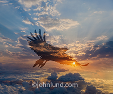 The silhouette of a raptor in flight soars over a high altitude cloudscape and sunset in this unusual concept stock photo about freedom, opportunity and even danger.