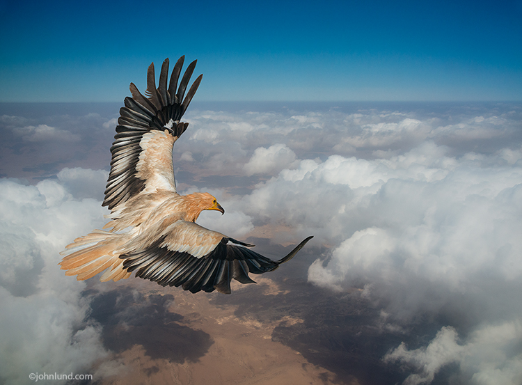 A fictional bird of prey spreads its wings high over the clouds in this fantastical photoshop composite and stock photo.