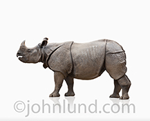 A rhinoceros stands on a white background in this stock photo of a rhino symbolizing strength and power.