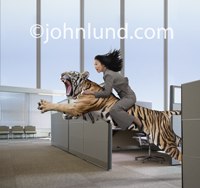 Photo of an Asian woman in business attire hanging tightly to a Tiger as it leaps through a corporate office.