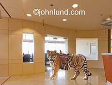 A tiger stands in a corporate lobby wearing a saddle in a take-off on the euphemism