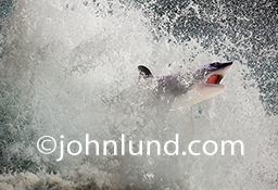 A Great White shark emerges from the splash and foam of a crashing wave in this stock photo about risk, danger and adventure.