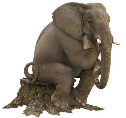 An african elephant sitting on a stump in the classic Thinker Pose - silouhette . Pic of a seated elephant. Picture of an African elephant against a white background.