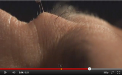 OMG! Who knew it looked like that? A super slow motion HD video of an eyebrow hair being plucked!