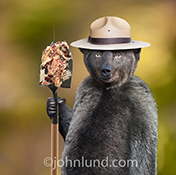 Smokey the bear stands holding a shovel covered in smashed cake with a single smoking candle in a  parody image for a humorous greeting and birthday card.
