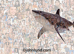 A great white shark swims through a background composed of two hundred plus individual portraits in a social media and networking stock photo about the risks and dangers of online social participation.