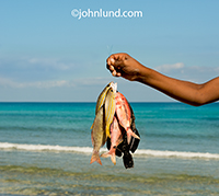 A young boy holds up the day's catch, the fish he has caught in the warm tropical waters off of Socotra island.