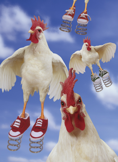 Chicken With Tennis Shoes On