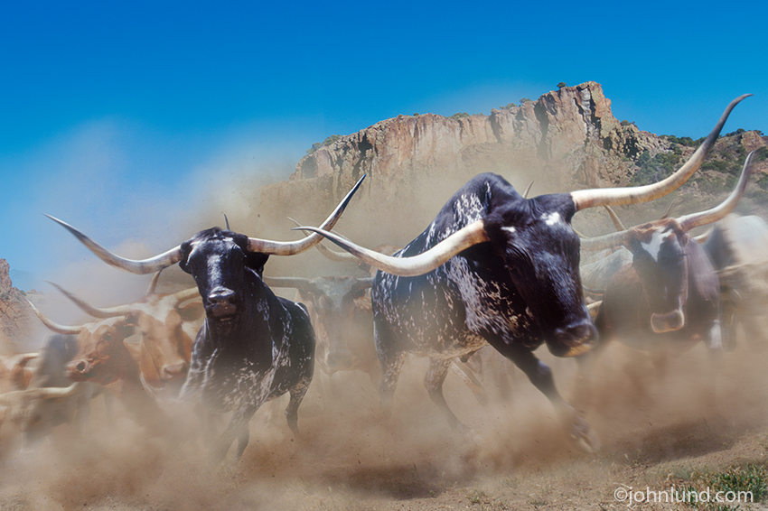 A stampeding herd of dangerous longhorn cattle coming right at the viewer in a cloud of dust and debris.