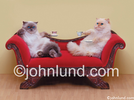 Funny animal picture and stock image of two cats having cups of tea while sitting on a love seat or sofa.