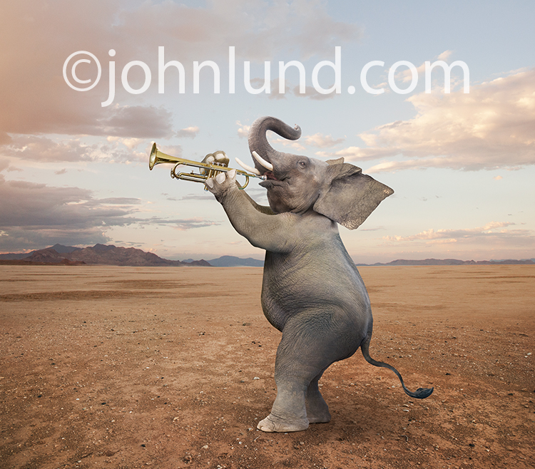 A funny anthropomorphic elephant stands and plays the trumpet in a humorous stock photo and greeting card image.